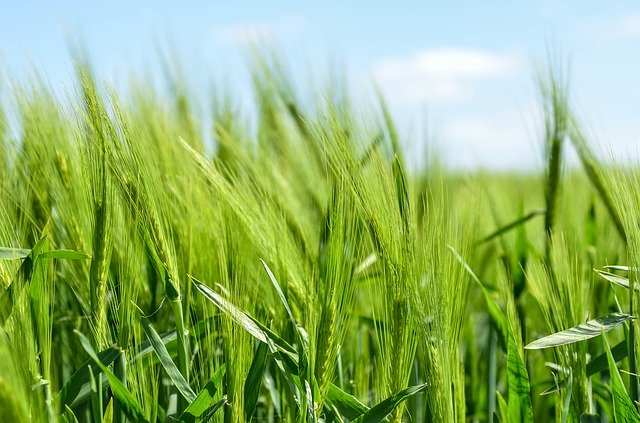 Contract Farming  &  the new ordinances that affect the Farmers